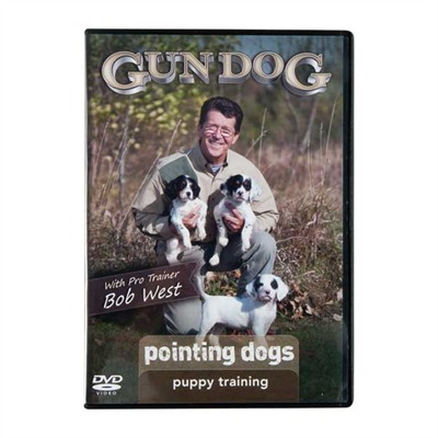 Pointing Dogs: Puppy Training