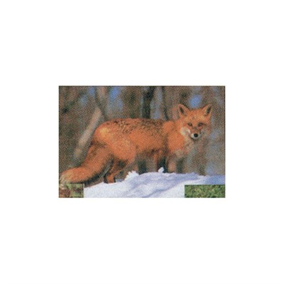 #107 Red Fox Target
